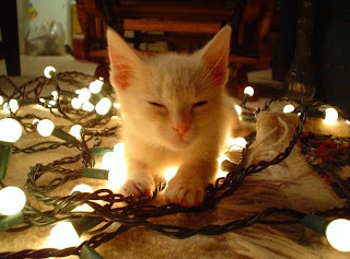 merry christmas from funny cats - Merry Christmas Cat