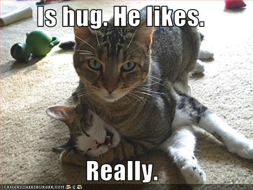 lol cat hug