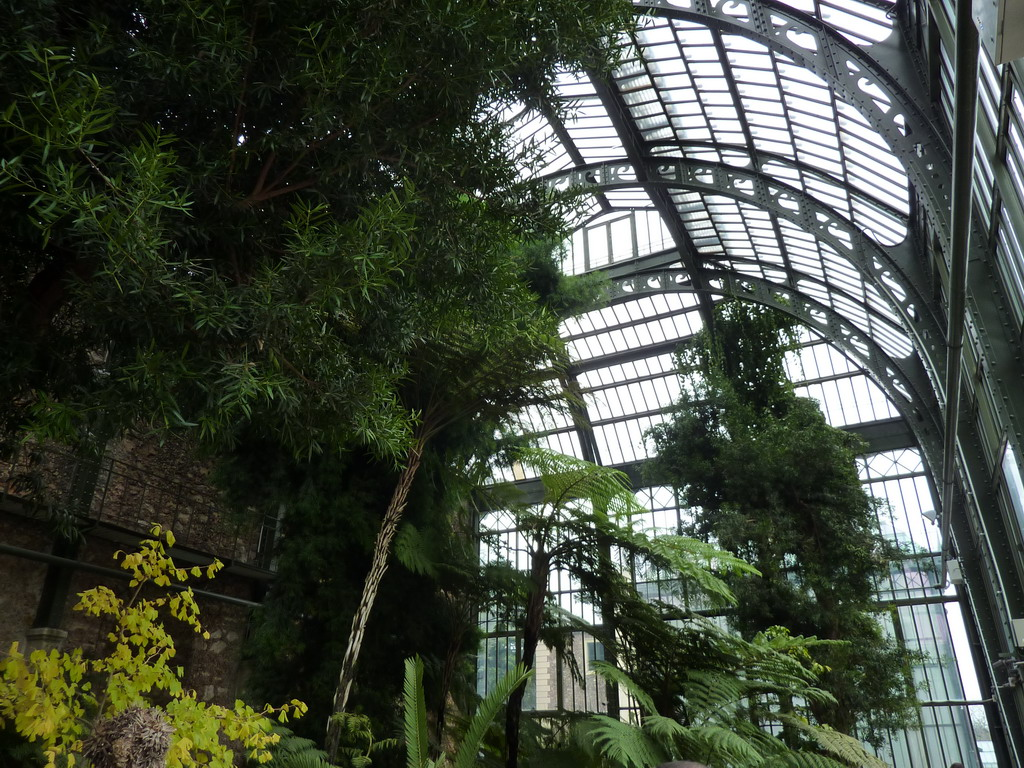 Daily photo in paris les grandes serres du jardin des plantes for Jardin plantes paris