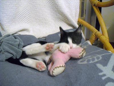 gatita jugando soy un gato
