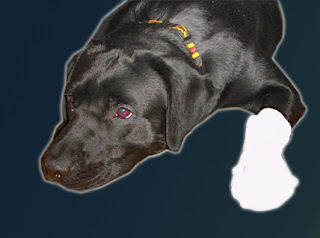 Pies Platon Placek chora łapa