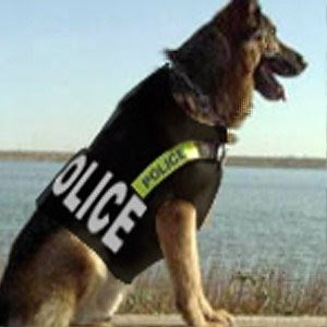 Guerra de imagenes Perros-policia-chaleco-antibalas