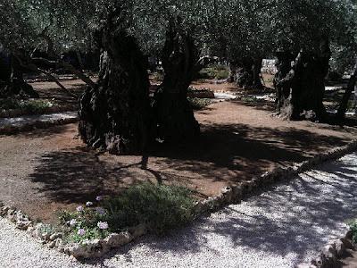 Jardim da Oliveiras