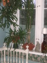 Kuvia verannaltamme - Bilder från vår veranda