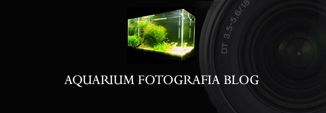 Aquarium Fotografia Blog
