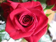Jeg har fått en rose