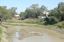 The dying Darling River at Wilcannia, April 2008