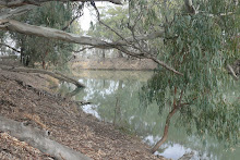 Southern Australia's 3rd. largest river, the Murrumbidgee near Balranald NSW Sept. 2008