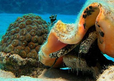 unique fishes in deep sea ocean