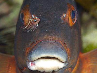 deep sea ocean life