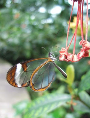 butterfly transparent macro shot