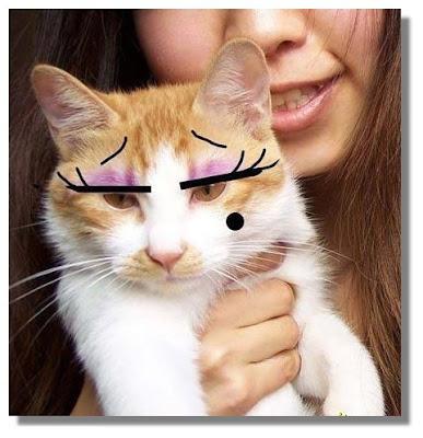 girlie cat