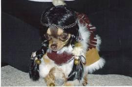 dog dress for you dog
