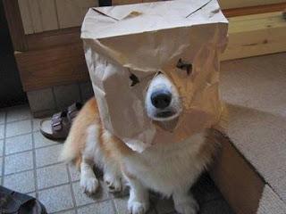 dog dress game for halloween
