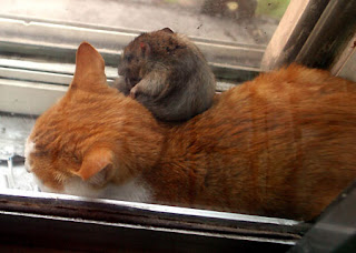 cat & mouse can live together