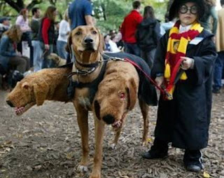 harry potter and three headed dog