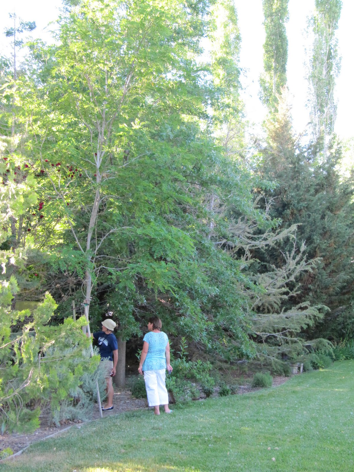 On the garden path garden tour preview for Specimen evergreen trees small