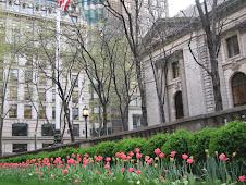Tulipanes en primer plano