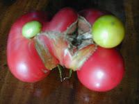Thteed Freak Mutant Tomato
