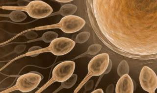 [Image: sperma.jpg]