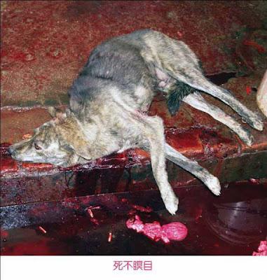 Human skinned alive - photo#14