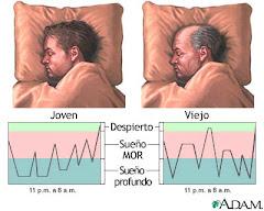 Patrones de sueño en el joven y en el viejo.