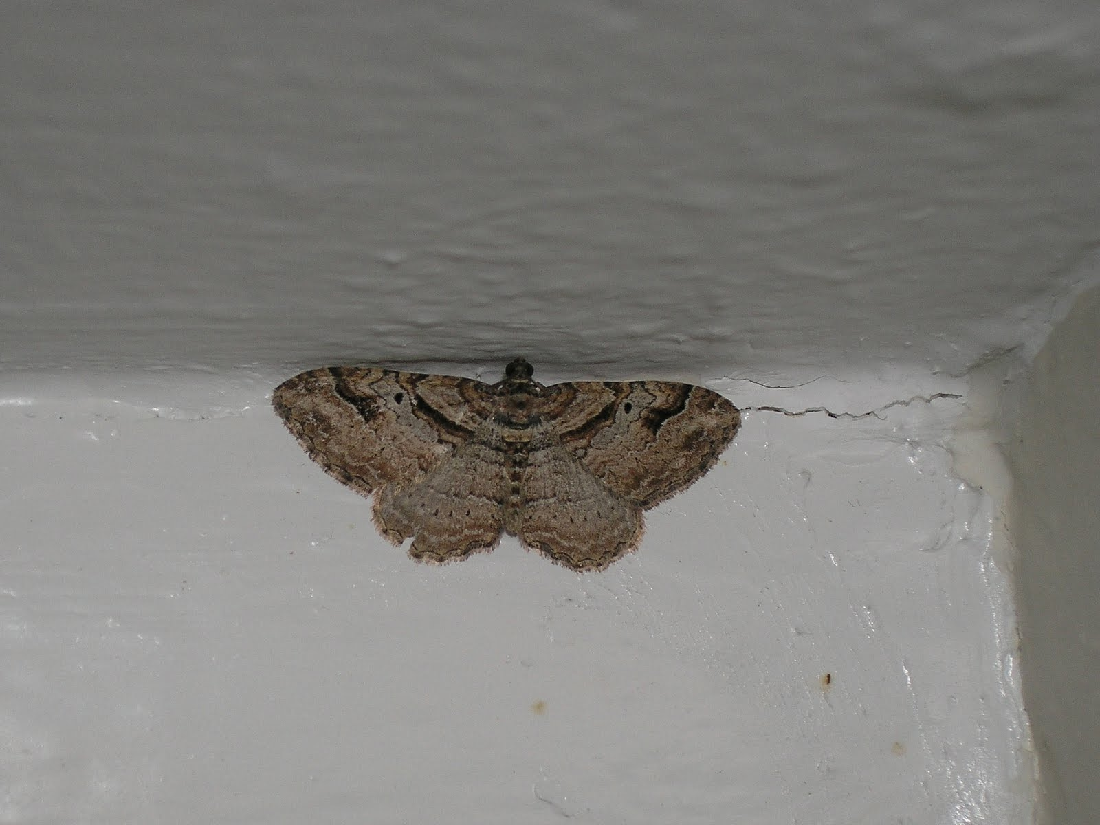 Red 39 s Good Vs Evil Cow Barn More Moths Muths in the Bathroom. Moths In Bathroom