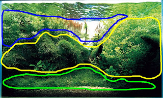As For The Foreground (green), Midground (yellow), And Background (blue),  The Foreground Is Clearly Almost Entirely Moss. This Aquascape Makes Use Of  Moss ...