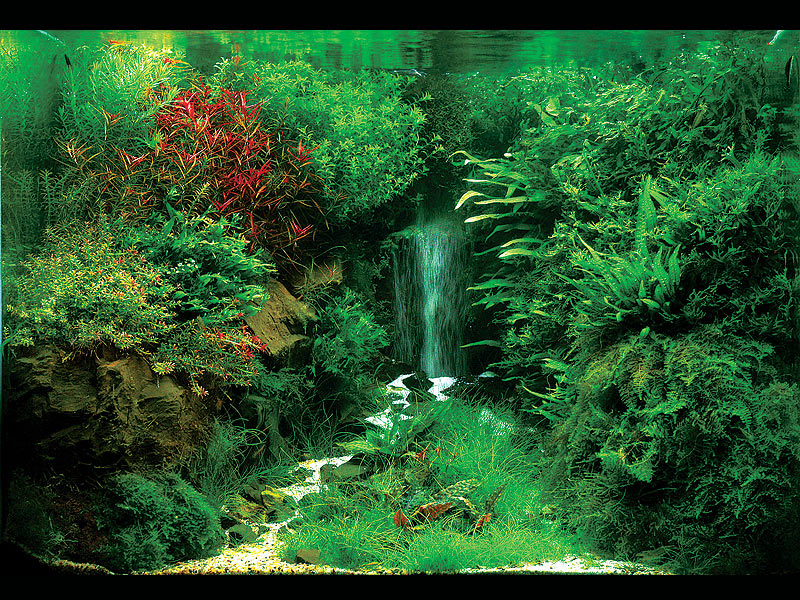 Aquascaping interior designing for fish tanks for Waterfall fish tank