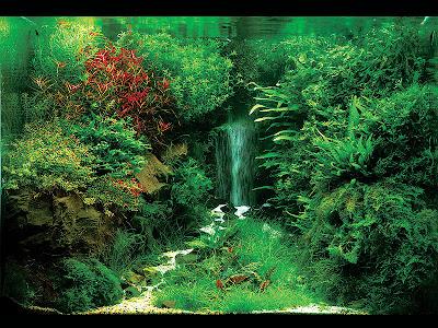 Wasserfall aquarium