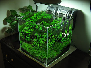 Aquascape Of The Week: Foofooreeu0027s ADA Cube Garden