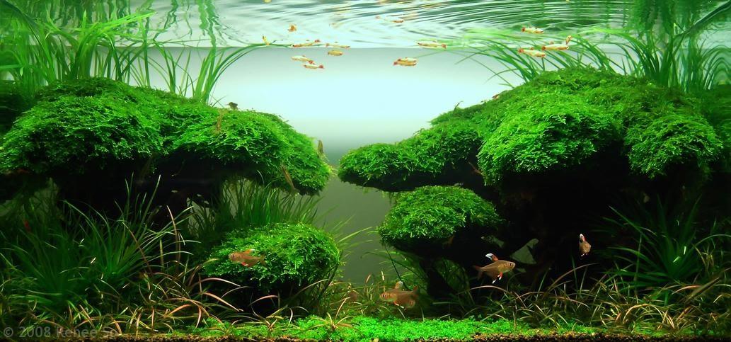 Aquatic Eden: Aquascape of the Week: Renee Sos