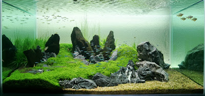 Elegant Starting An Iwagumi Aquascape
