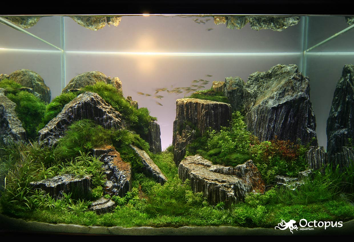 Aquatic eden aquascaping aquarium blog - Gallery aquascape ...
