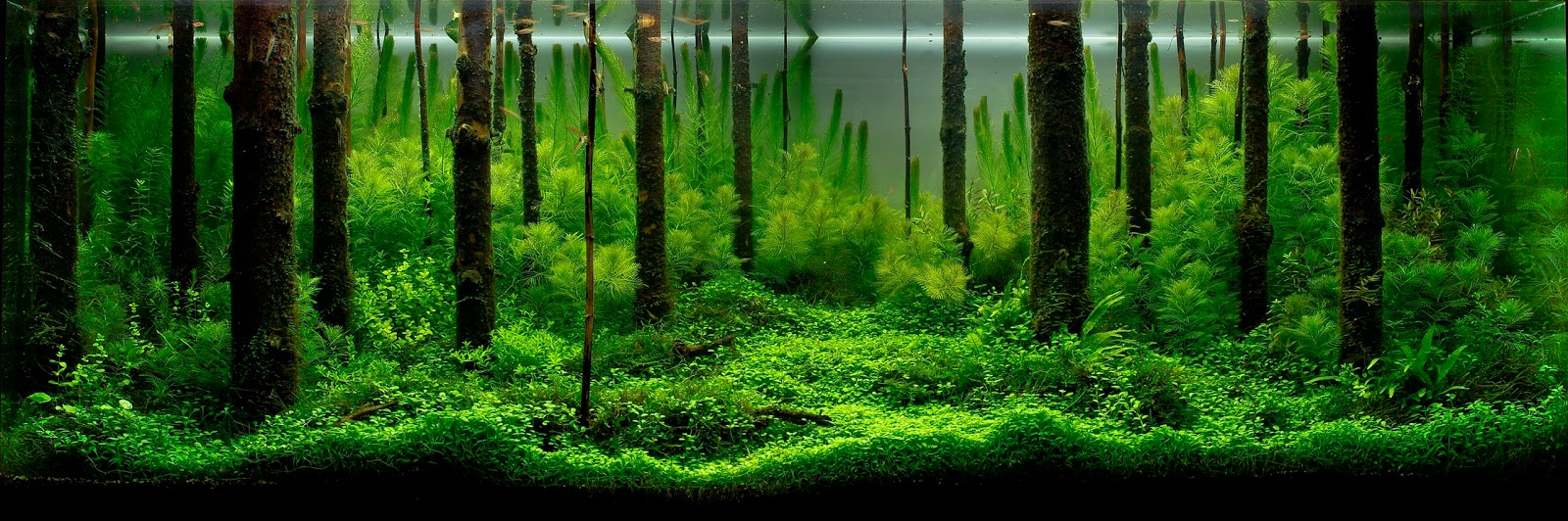 Pavel Bautins First Place 2010 IAPLC Aquascape