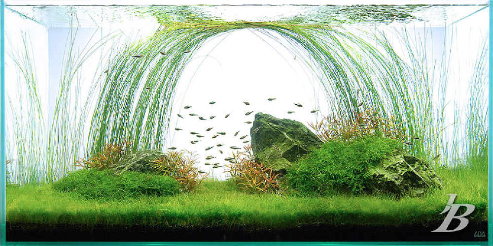 created a number of amazing aquascapes such as this one