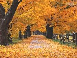 Quando começa o outono