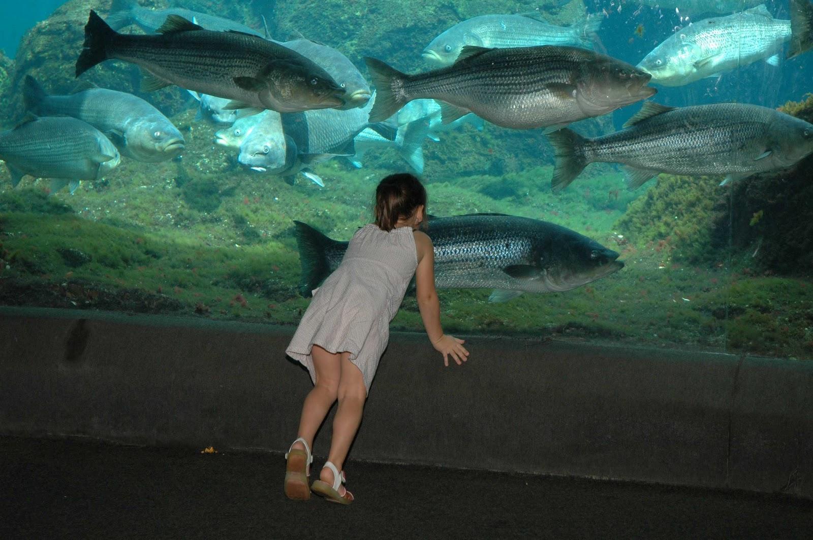 New York History Geschichte New York Aquarium 2