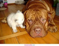 SE VIRES UM ANIMAL FERIDO AJUDA-O!! A VIDA DELE VAI DEPENDER DO TEU GESTO!