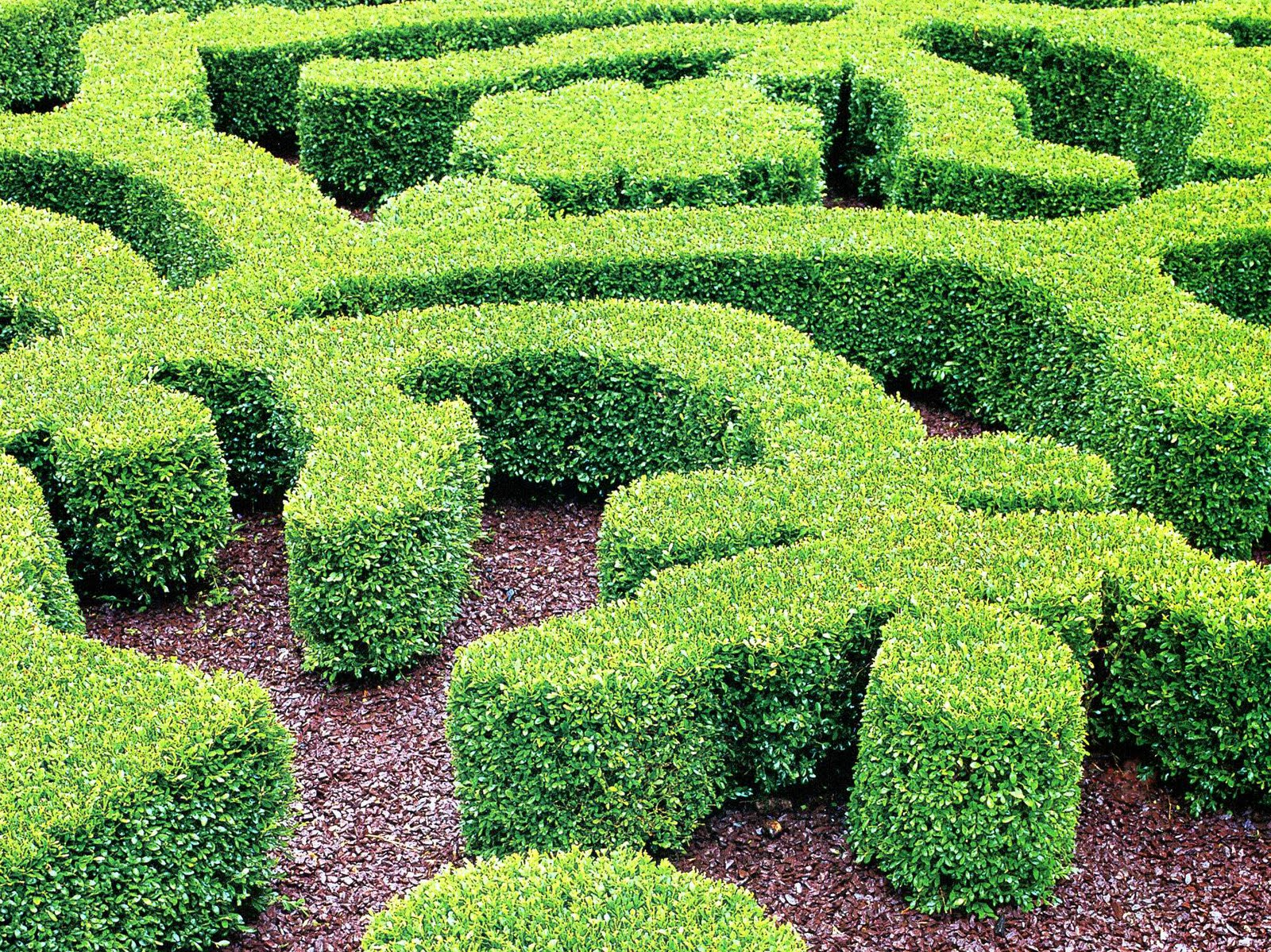 Plant preview parterre garden embroidering with plants for Parterre garden designs