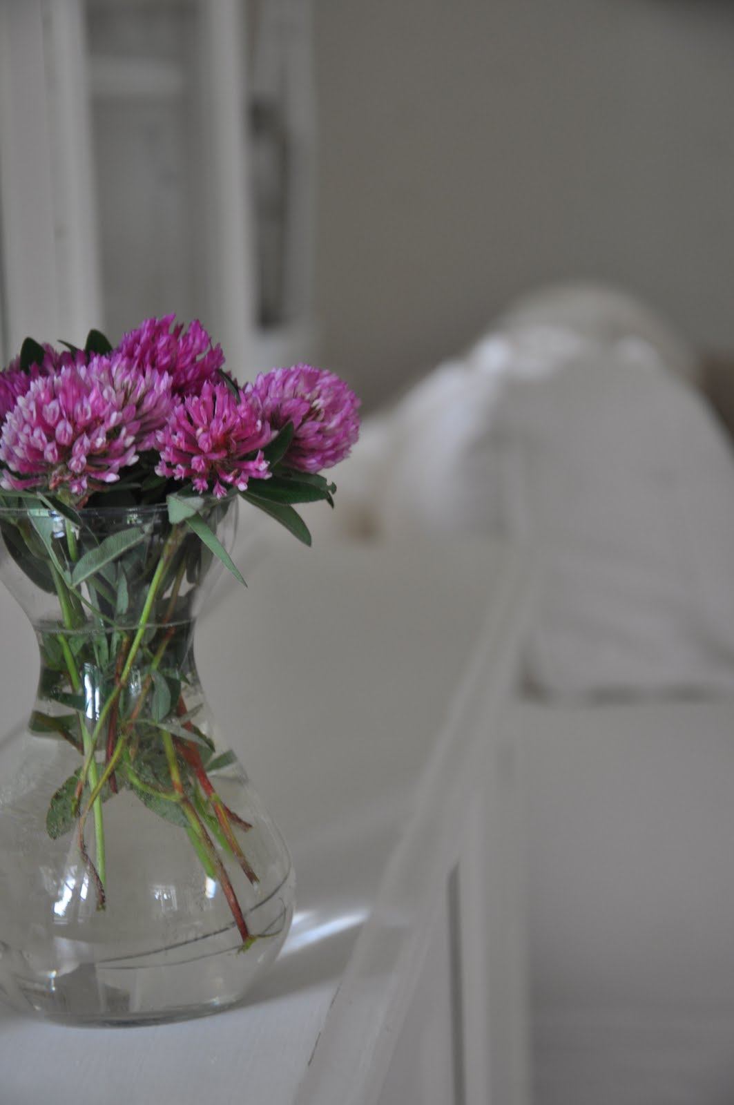 lupiner i vase