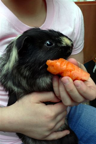 [Harry+and+carrot.jpg]