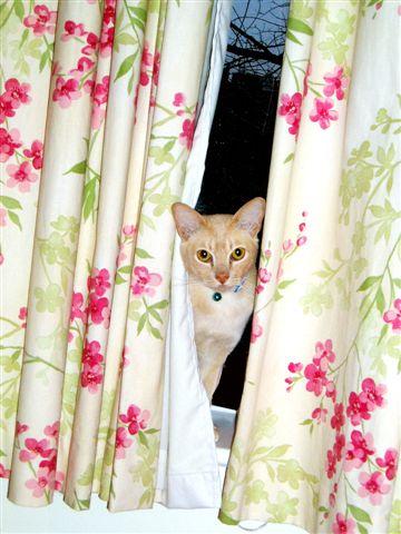 [Tom+behind+curtain+final.jpg]