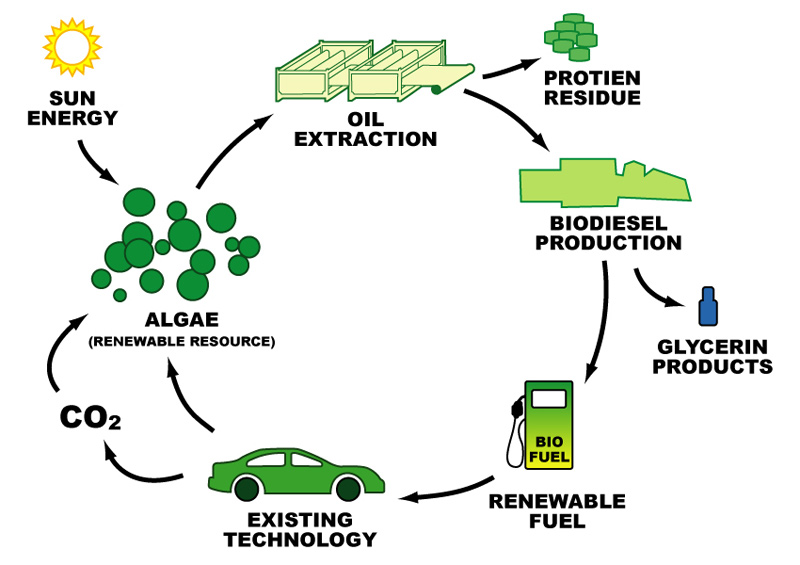 the technical issues in producing ethanol from cellulose in the new zealand biofuel industry Affordable and low-carbon biofuel, sugarcane ethanol has emerged as new techniques to produce ethanol plants producing cellulosic ethanol in.
