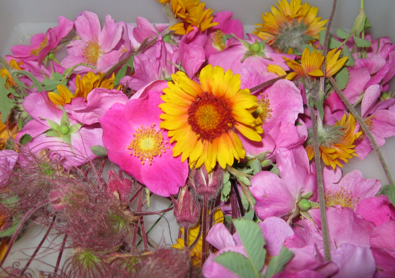 amyspressedflowers Piles of Posies to Press
