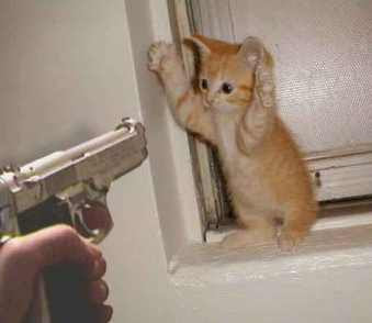 cute cats with gun wallpapers/pictures/photos gallery