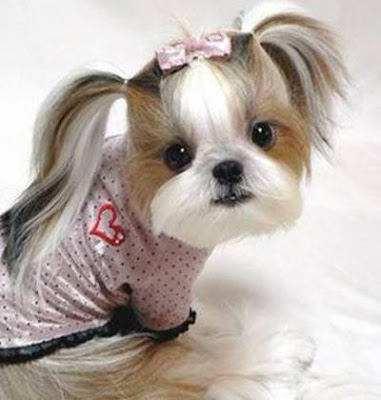 puppys cute puppies images video pics