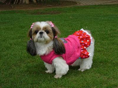 puppy pictures/puppy latest dresses with cute hair cuts