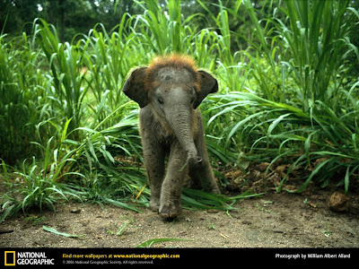 cute baby elephants video pictures-wallpapers