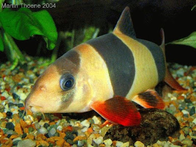 aquarium fishes images. Labels: aquarium fishes